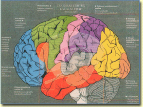 The Human Brain Functions